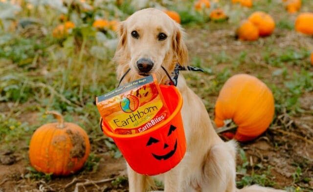 Treat Your Pet This Halloween