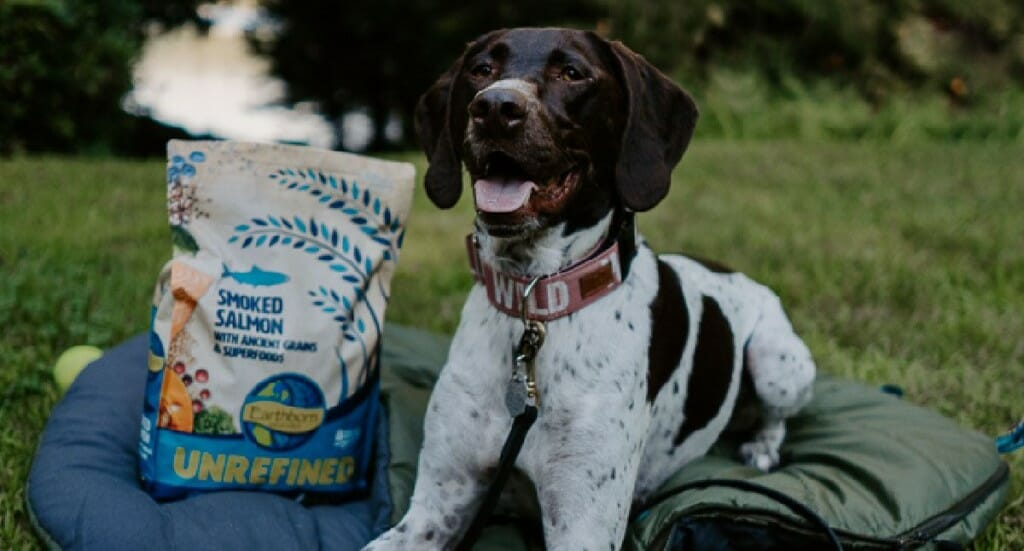 A german shorthaired pointer dog sits on her camping sleeping bag next to a bag of her Earthborn Holistic UNREFINED dog food