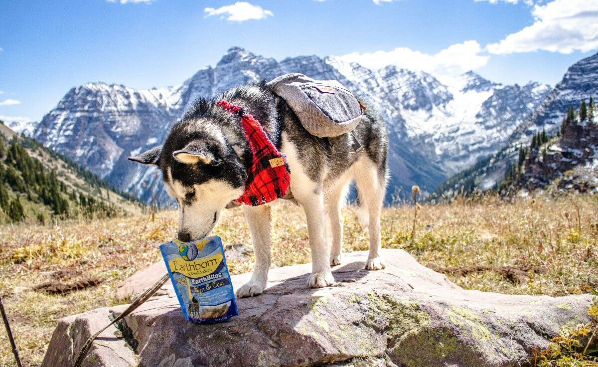 A husky stands on a rock in front of a rocky Colorado area with a bag of Earthborn Holistic dog treats