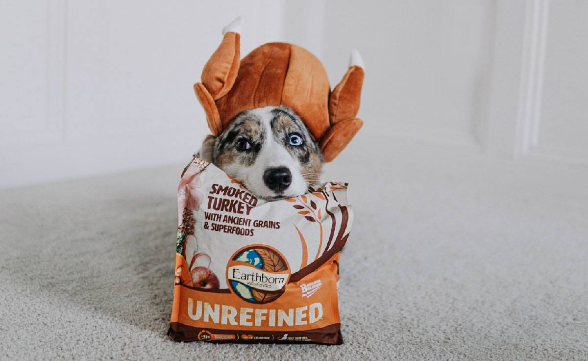 A corgi sits his head on top of an UNREFINED Smoked Turkey dog food bag with a turkey hat on