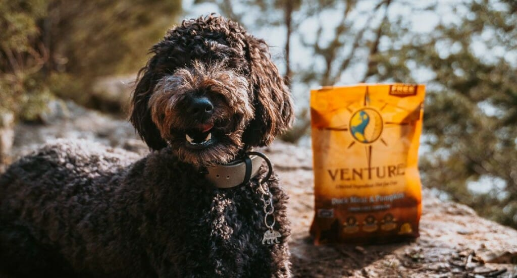 A black labradoodle sits next to a bag of Venture Duck Meal & Pumpkin dog food