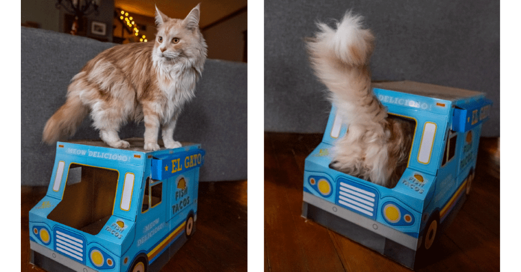 A cat plays with a taco truck cat scratcher