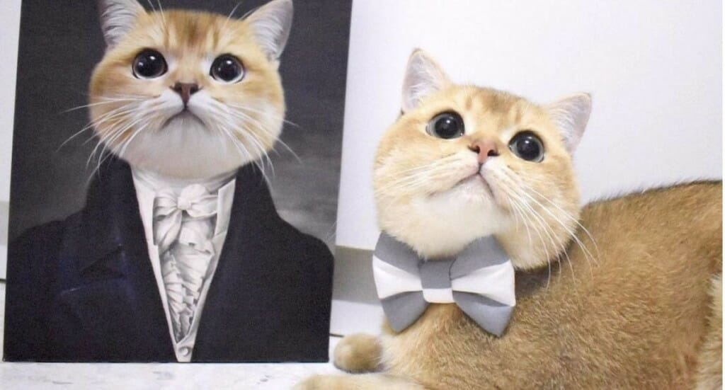 A cat looks up at the camera sitting next to a Crown and Paw pet portrait