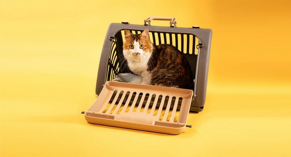 A calico kitten sitting in a front entry cat carrier