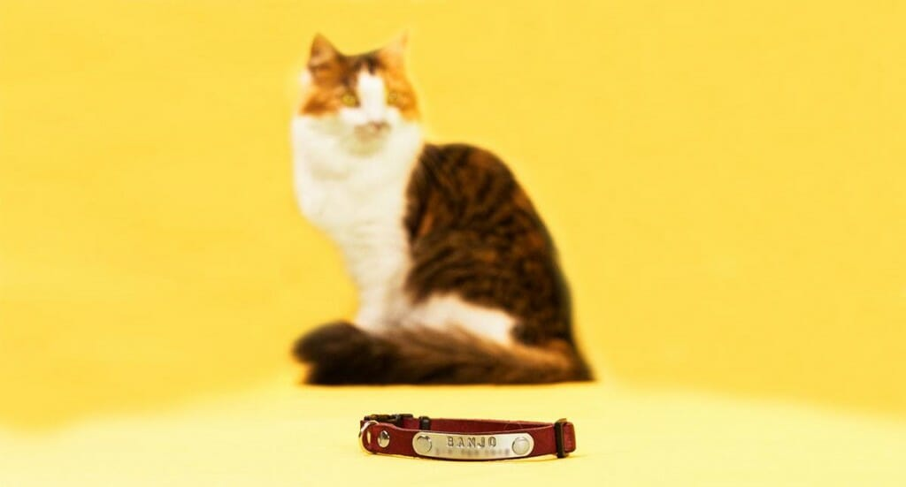 A closeup of a pink cat collar with a calico kitten sitting in the background