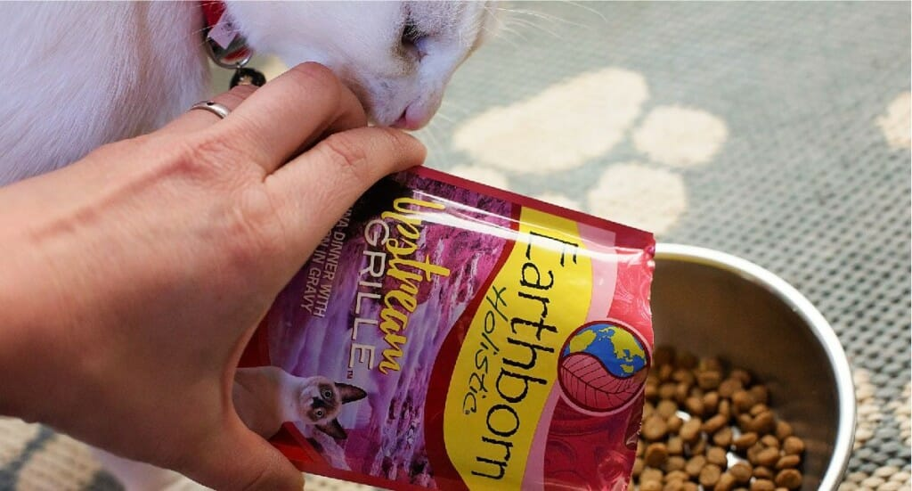 A white cat stands next to a bowl of kibble while her owner's hand pours an Earthborn Holistic Moist Cat Food Pouch into the bowl as a topper