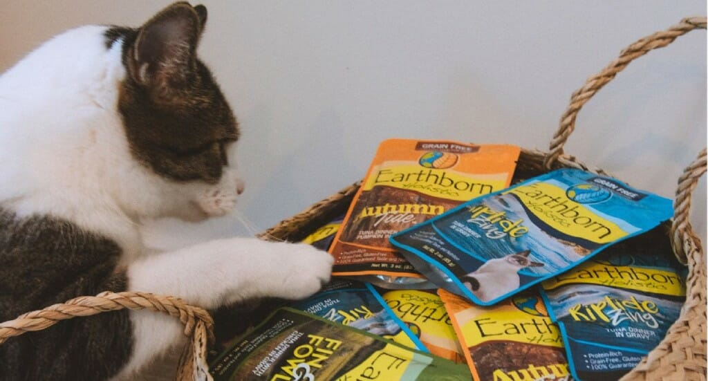 A black and white cat looks into a basket filled with Earthborn Holistic Moist Pouch cat food