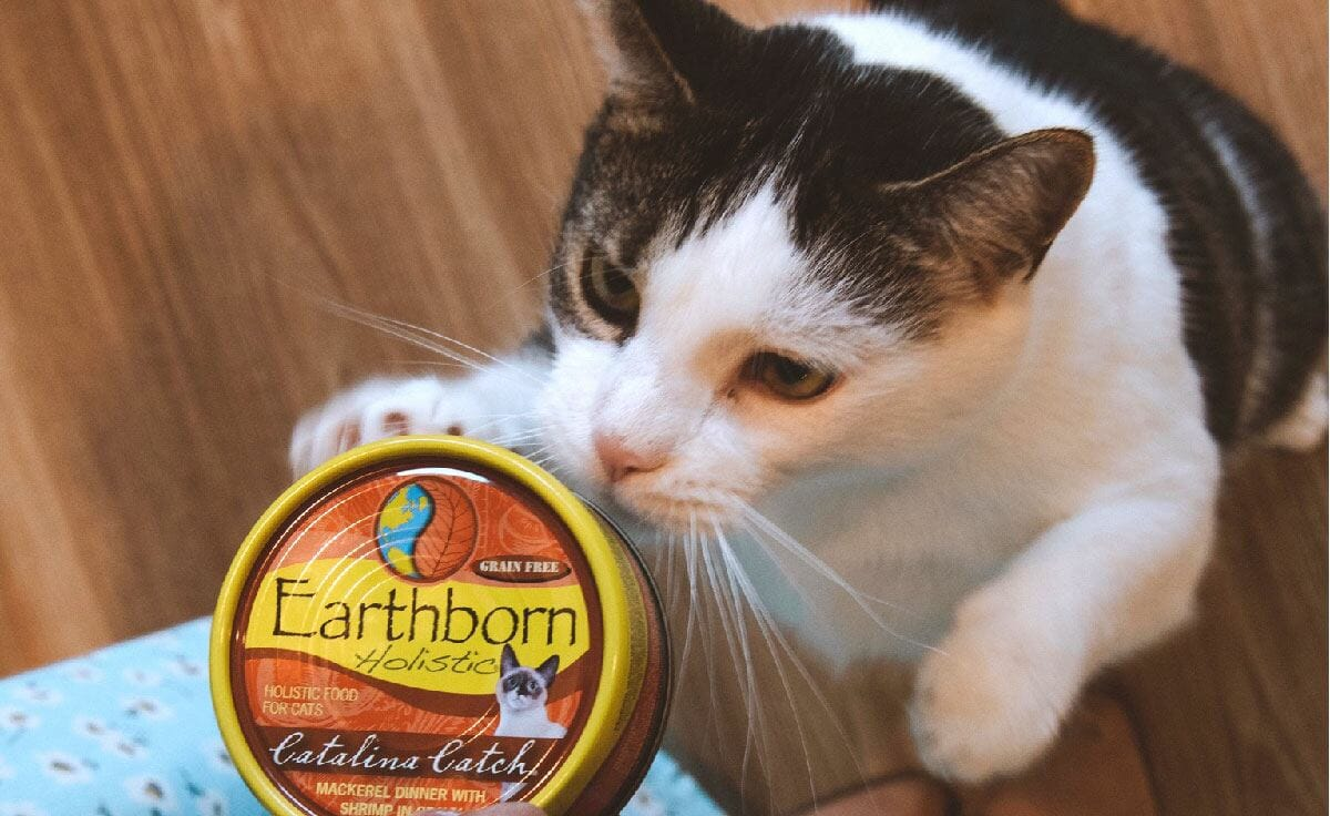 A black and white cat with an Earthborn Holistic Catalina Catch cat food can