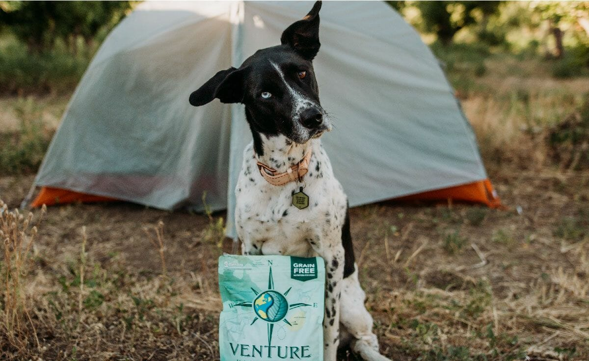 Black and white dog sitting in front of a camping tent with a bag of Earthborn Holistic Venture Roasted Lamb dog food