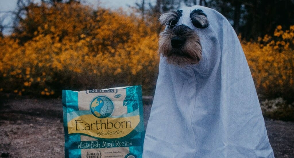 A Schnauzer dog in a sheet ghost Halloween costume sits next to a bag of Earthborn dog treats