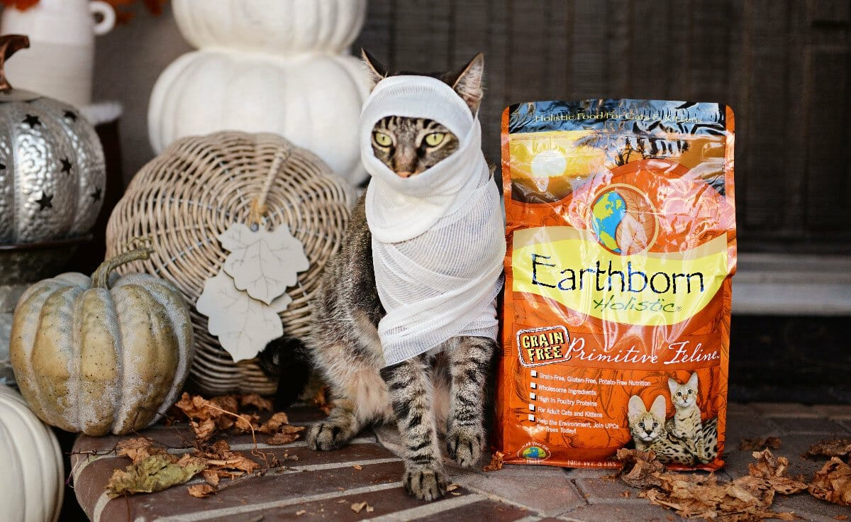 A cat in a mummy Halloween costume sits on a porch decorated for fall next to a bag of Earthborn Holistic cat food