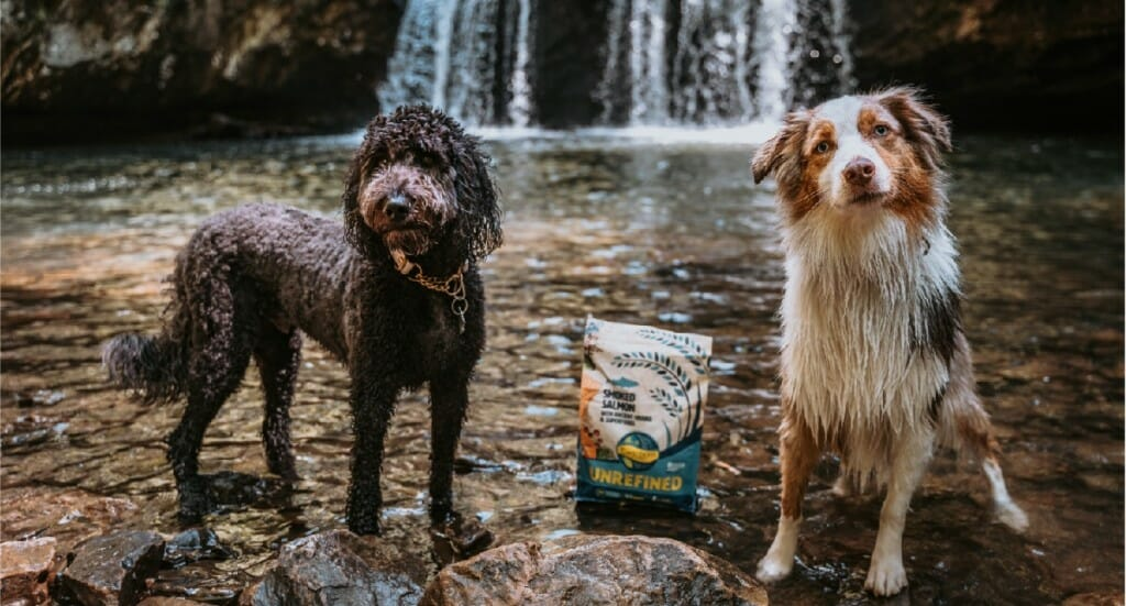 A Labradoodle and an Australian Shepard stand together at the bottom of a waterfall in Tennessee