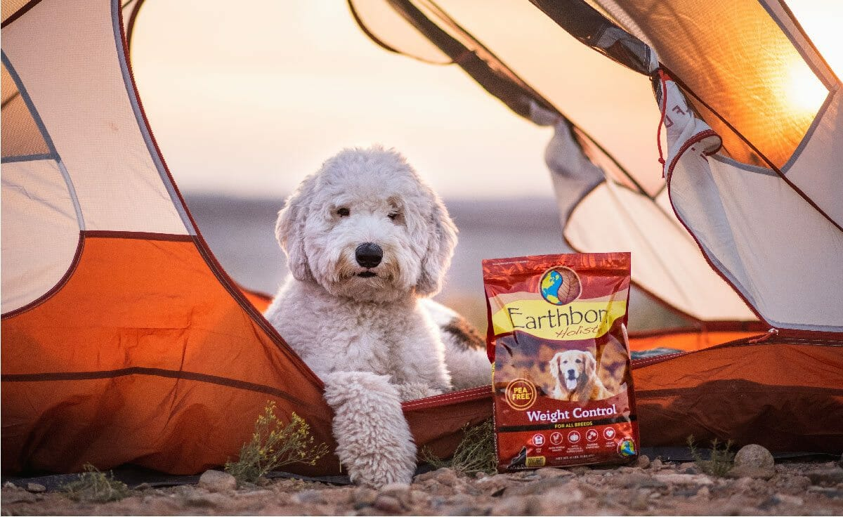 A white sheepadoodle sits in a tent next to a bag of Earthborn Holistic Weight Control dog food