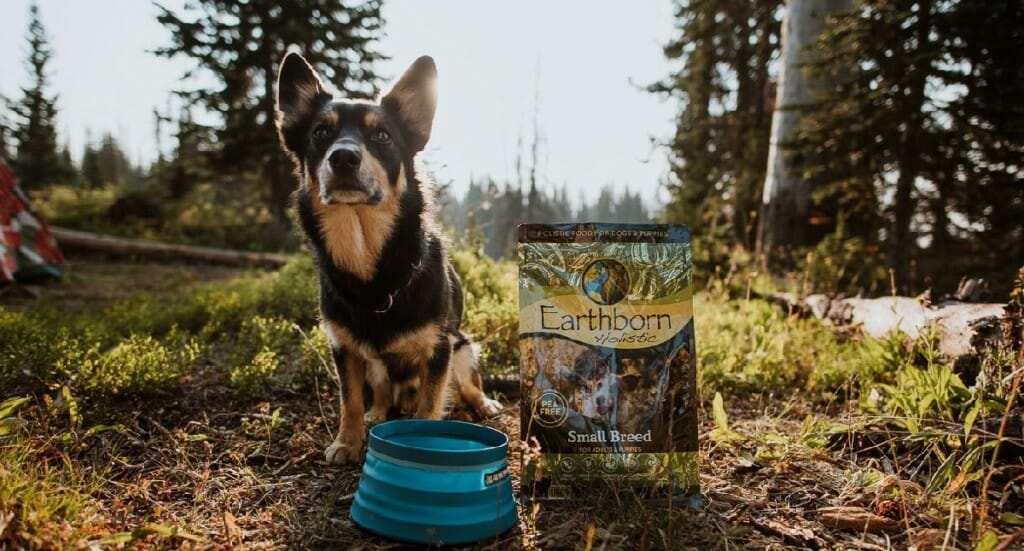 A dog stands next to a bowl and Earthborn Holistic Small Breed dog food
