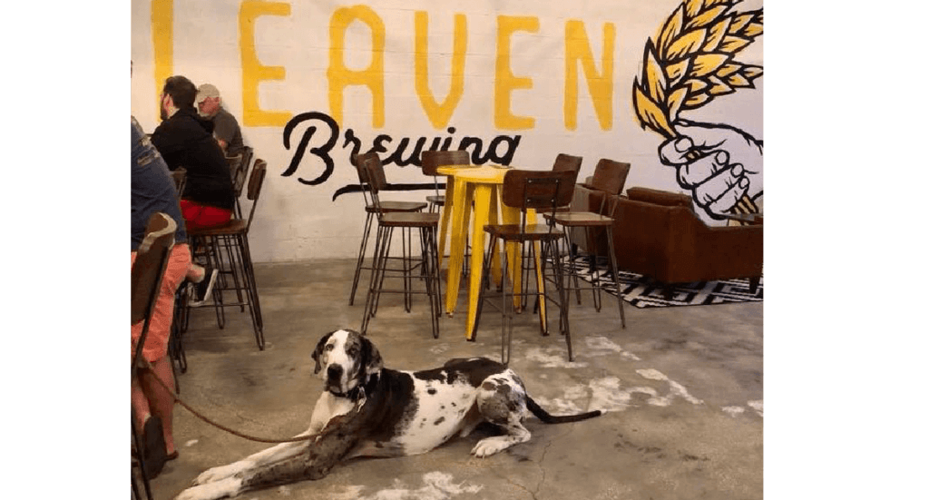 A great dane lays on the floor of Leaven Brewery in Tampa, FL