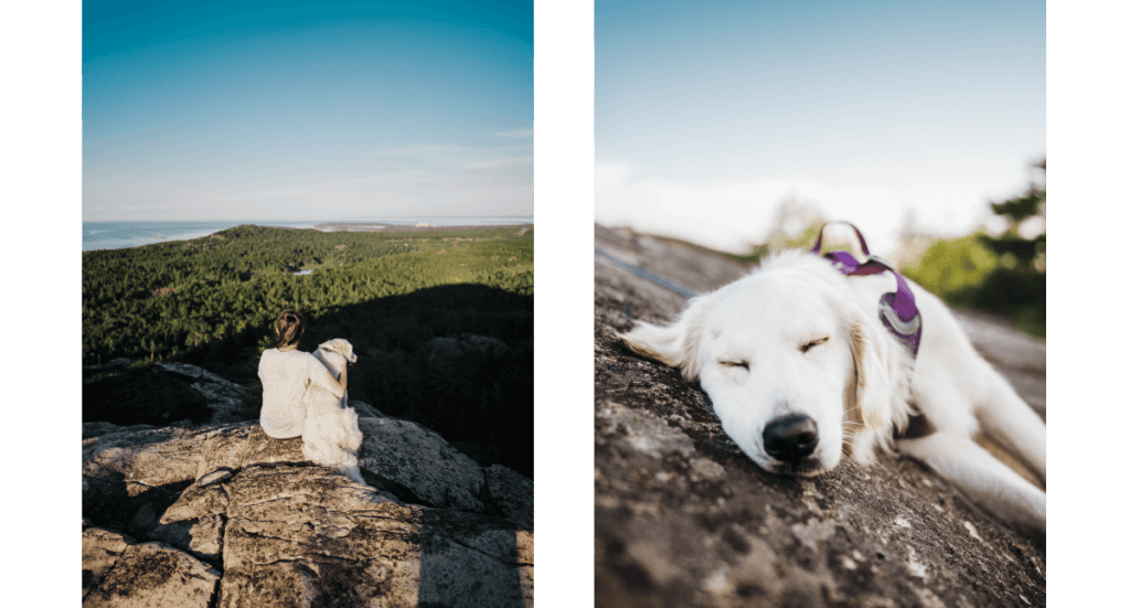 A golden retriever sits with his owner on top of Hogback Mountain in Michigan while another one takes a nap