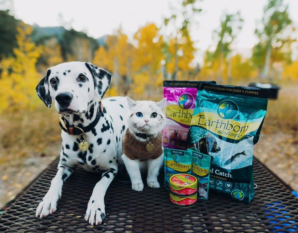 Dalmatian dog and kitten sitting next to Earthborn Holistic food