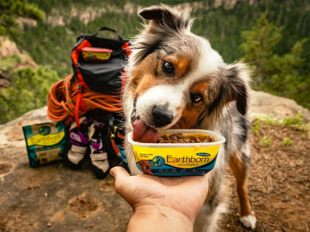 Dog eating a serving of Earthborn Holistic on a mountain trail
