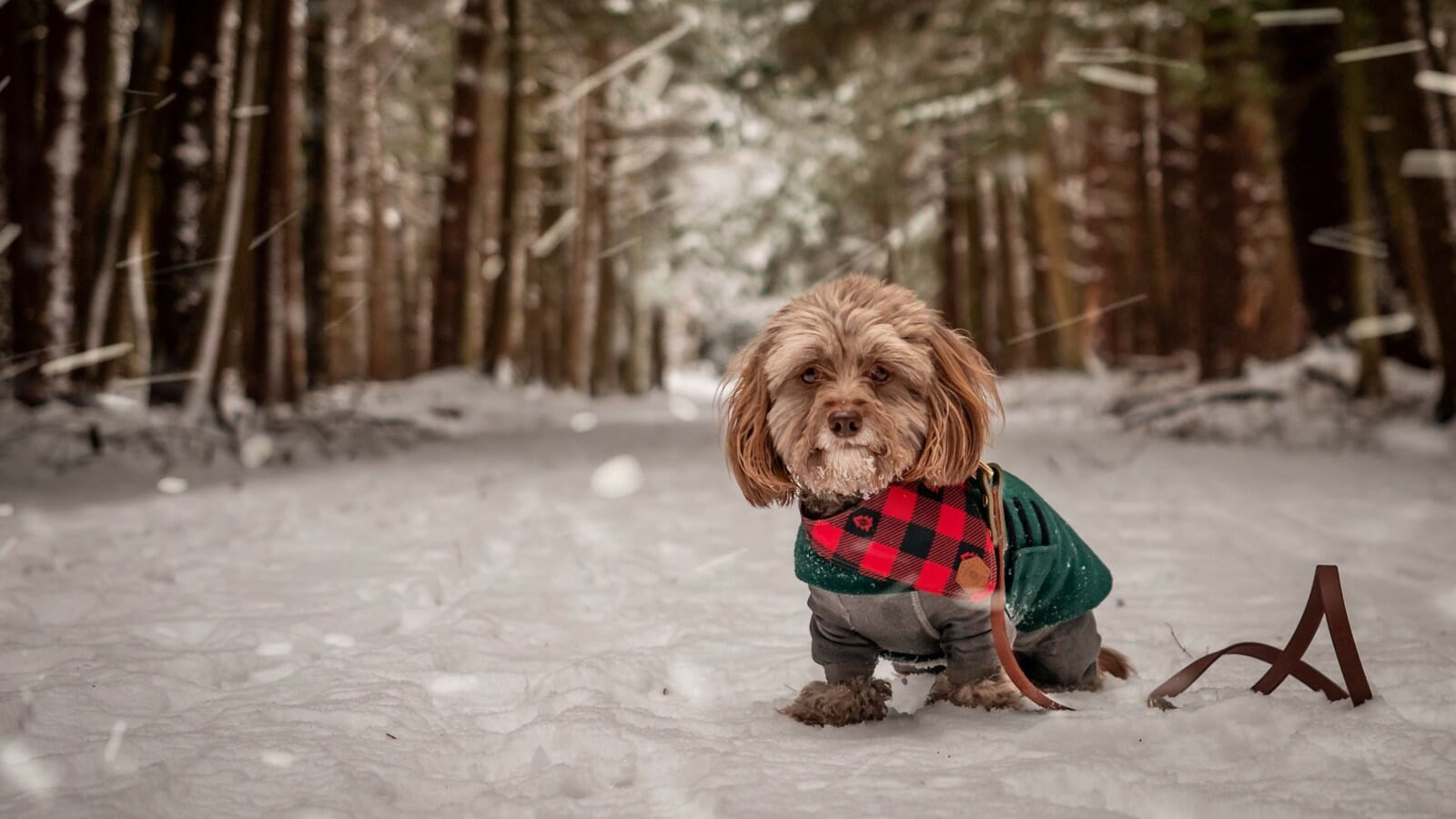 Small dog in a coat standing on a snowy forest path