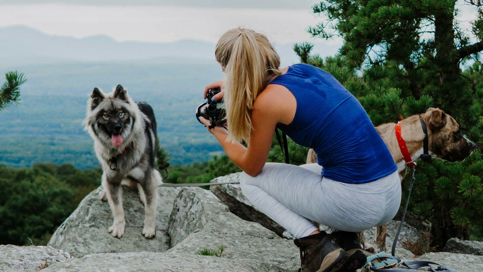Person taking a photo of dogs on a cliffside