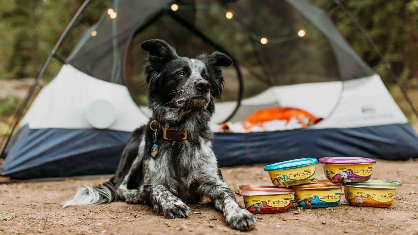 Dog sitting next to a containers of Earthborn Holistic dog food and a tent