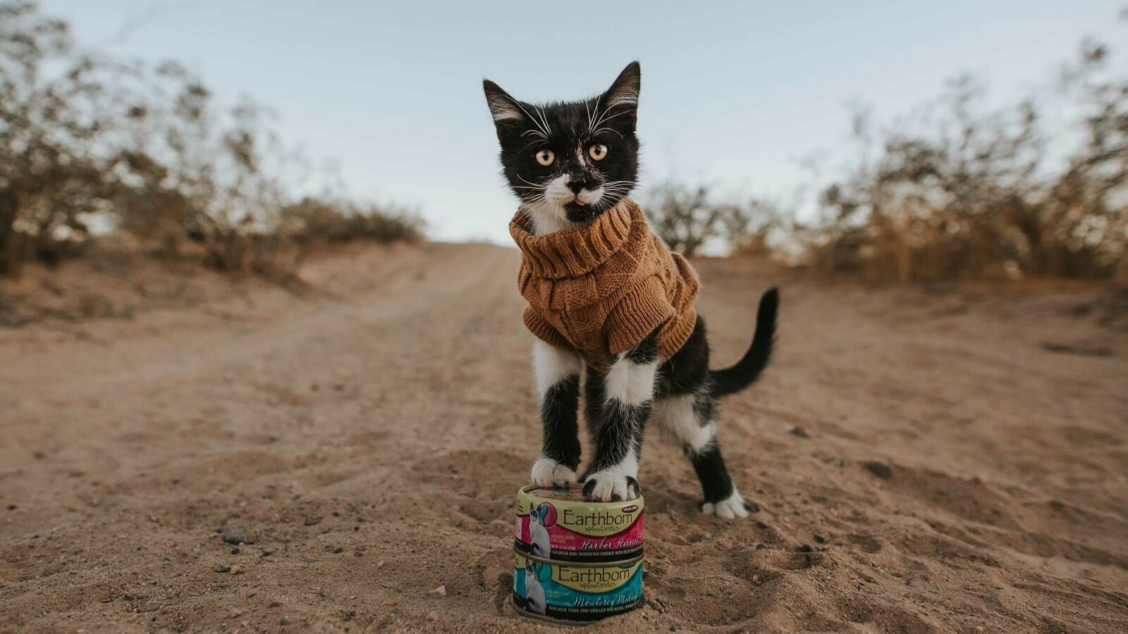Cat with front paws on top of Earthborn wet cat food cans in the desert