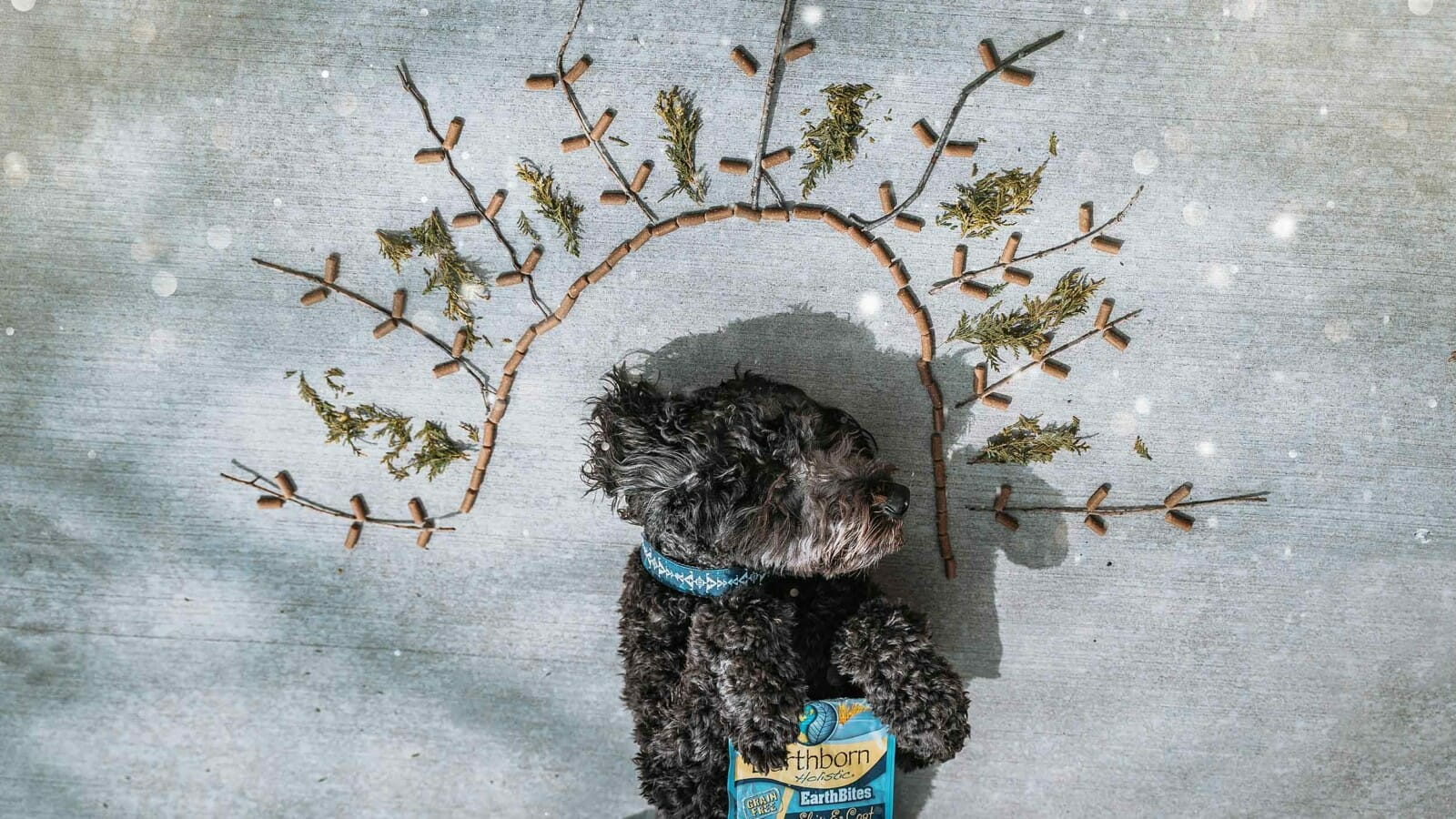Dog holding a bag of Earthborn Holistic EarthBites surrounded by herbs and dog treats
