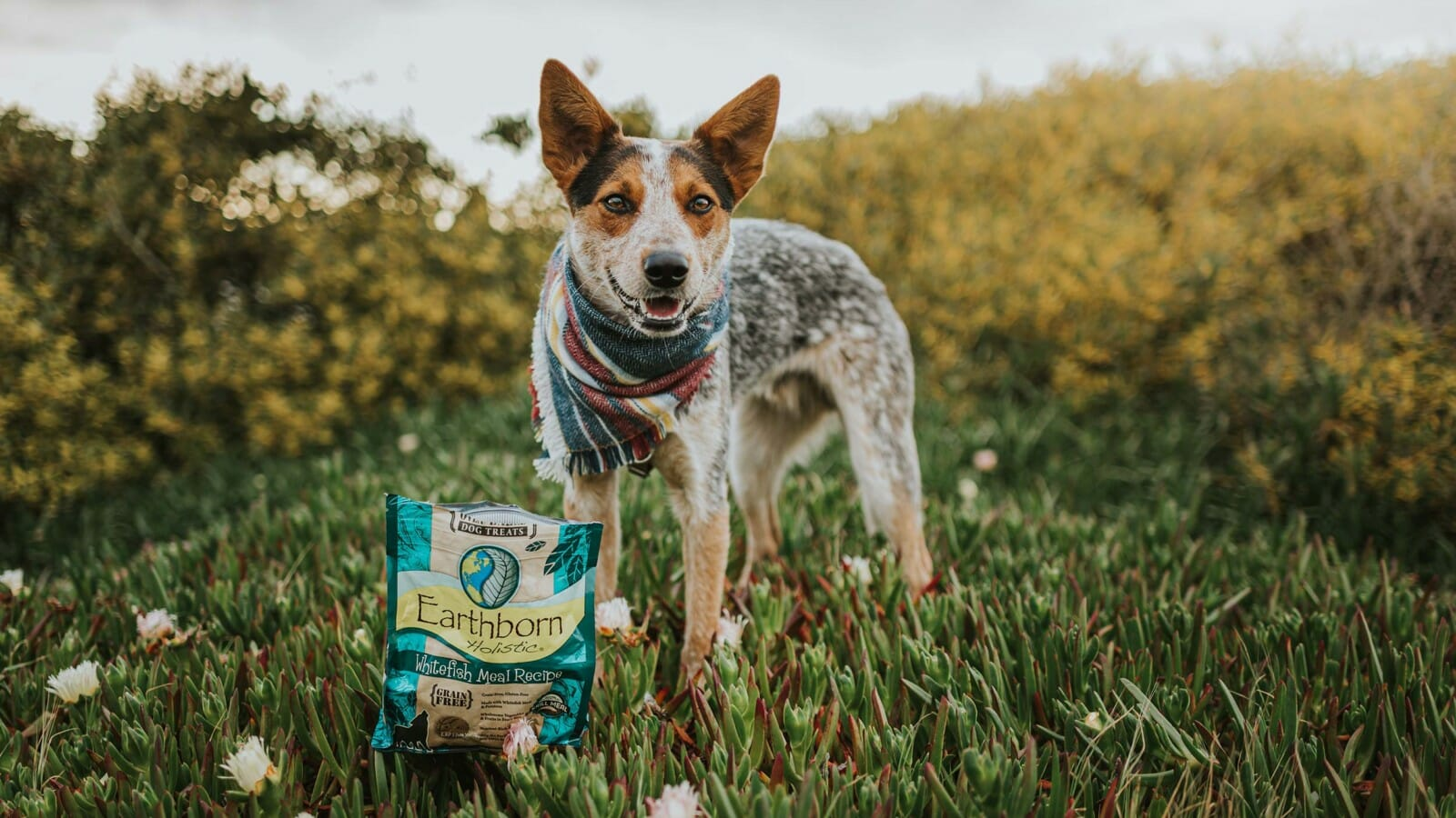Dog smiling next to bag of Earthborn Holistic dog food