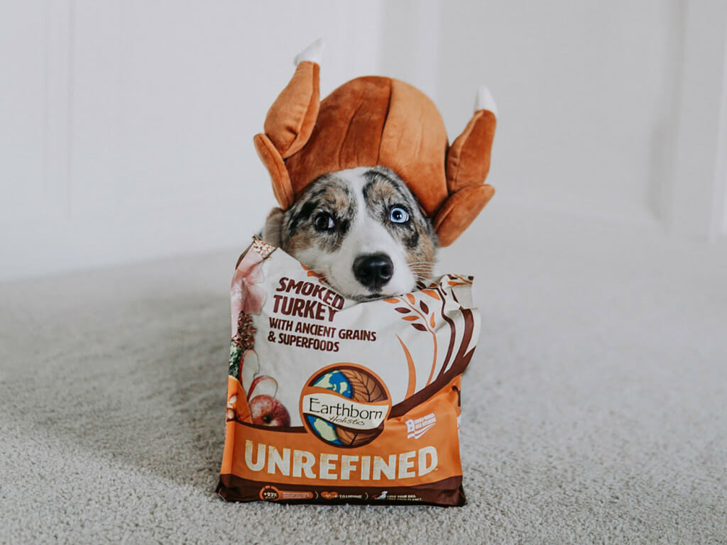 Dog peeking out of an opened bag of Earthborn Holistic Unrefined Smoked Turkey dog food