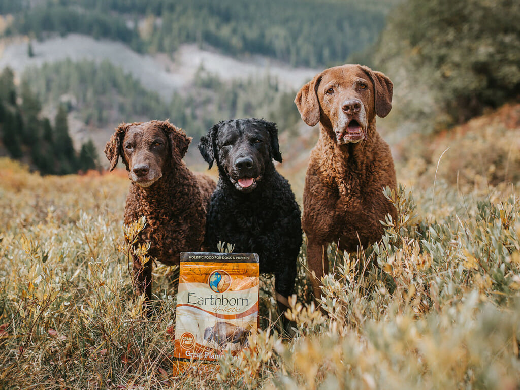 Three dogs standing in a grain field next to a bag of Earthborn Holistic Great Plains Feast dog food
