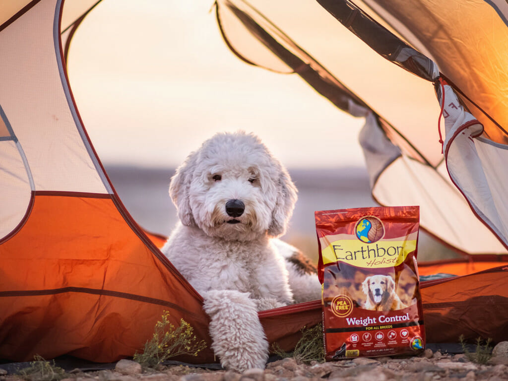 Dog looking out of a tent flap with a bag of Earthborn Holistic Weight Control dog food