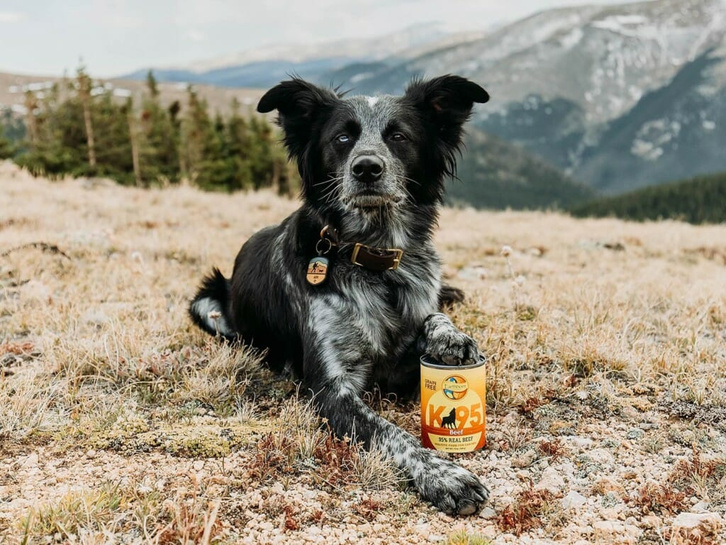 Dog laying with a can of Earthborn Holistic K95 Beef dog food