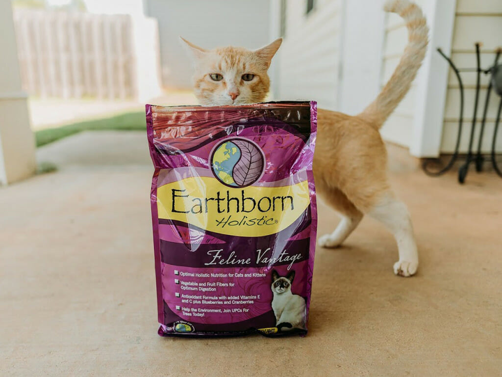 Cat peeking out from the top of a bag of Earthborn Holistic Feline Vantage cat food