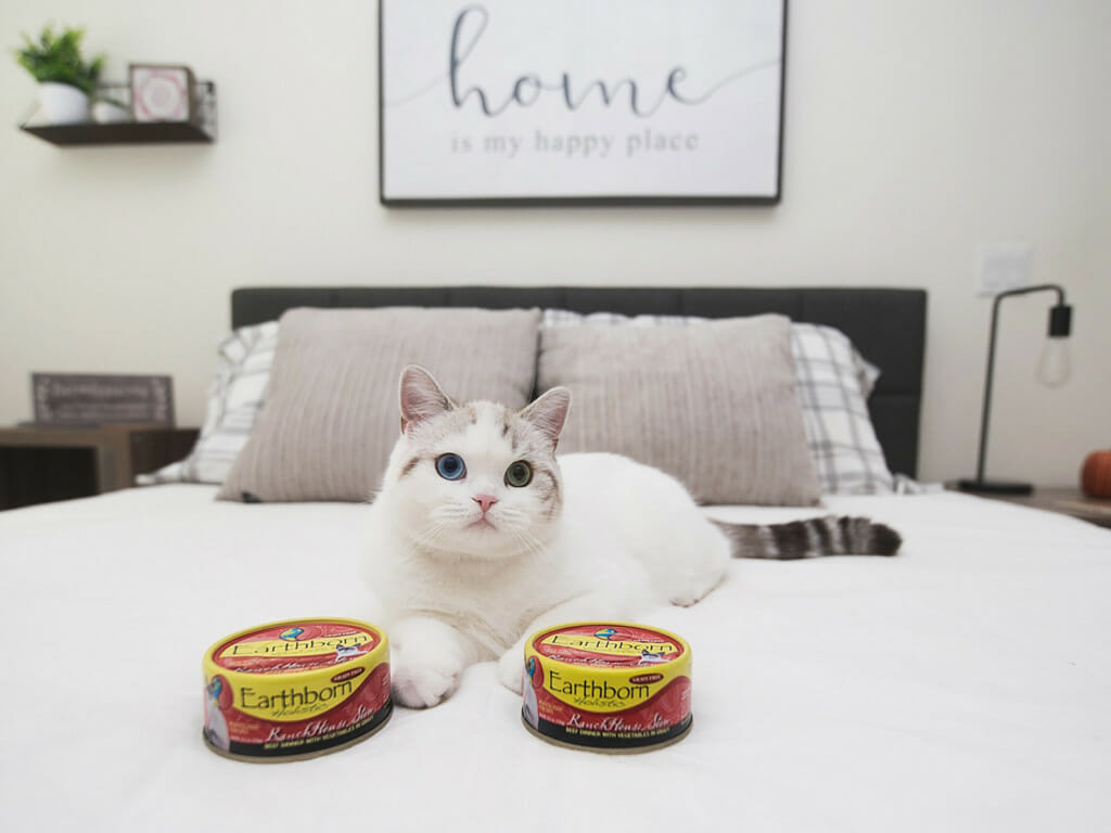 Cat sitting on a bed next to a can of Earthborn Holistic RanchHouse Stew cat food
