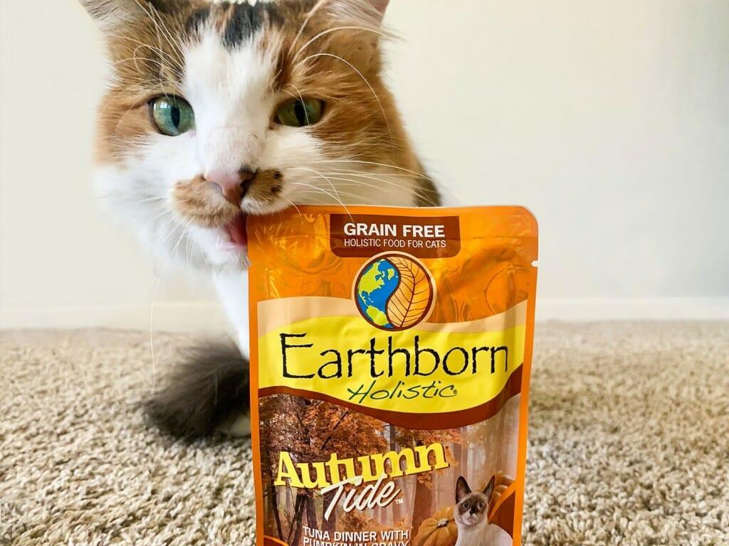 Cat biting at a bag of Earthborn Holistic Autumn Tide cat food