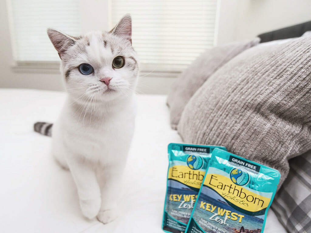 Kitten on a bed next two pouches of Earthborn Holistic Key West Zest cat food