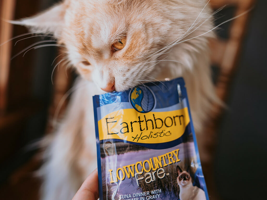 Cat nibbling at a pouch of Earthborn Holistic Lowcountry Fare cat food
