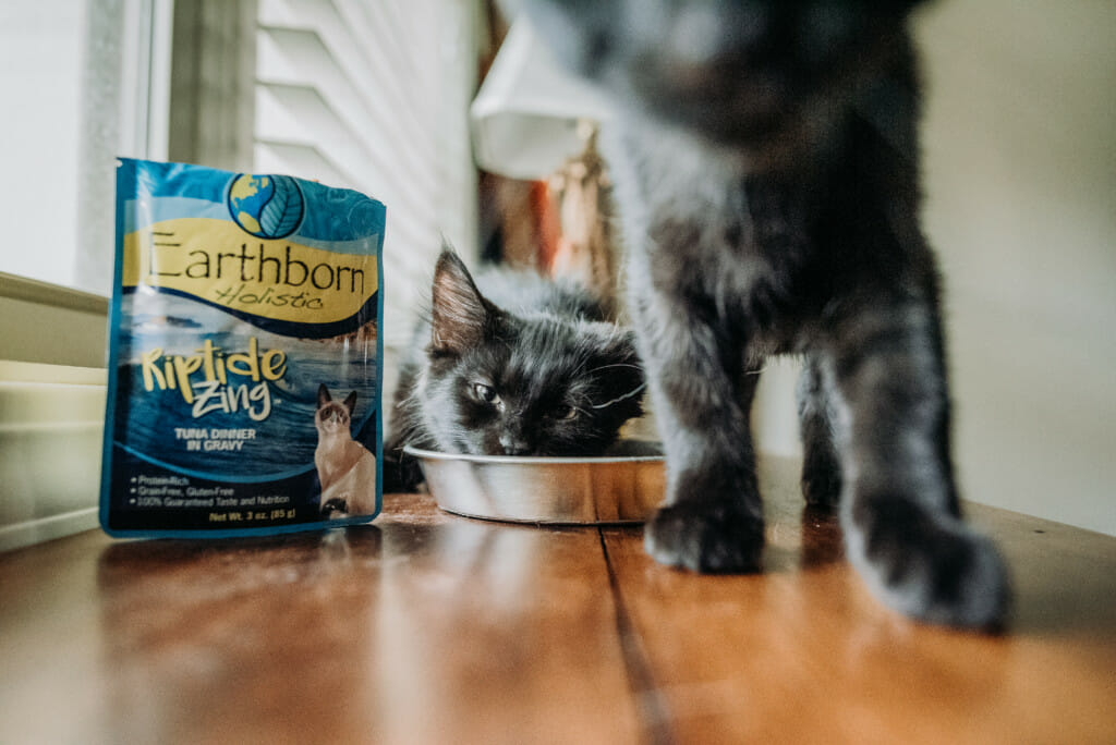Two cats eating from a bowl of Earthborn Holistic Riptide Zing cat food