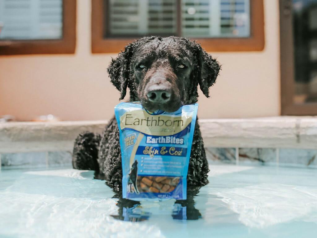 Dog biting a bag of Earthborn Holistic EarthBites Skin and Coat in a pool