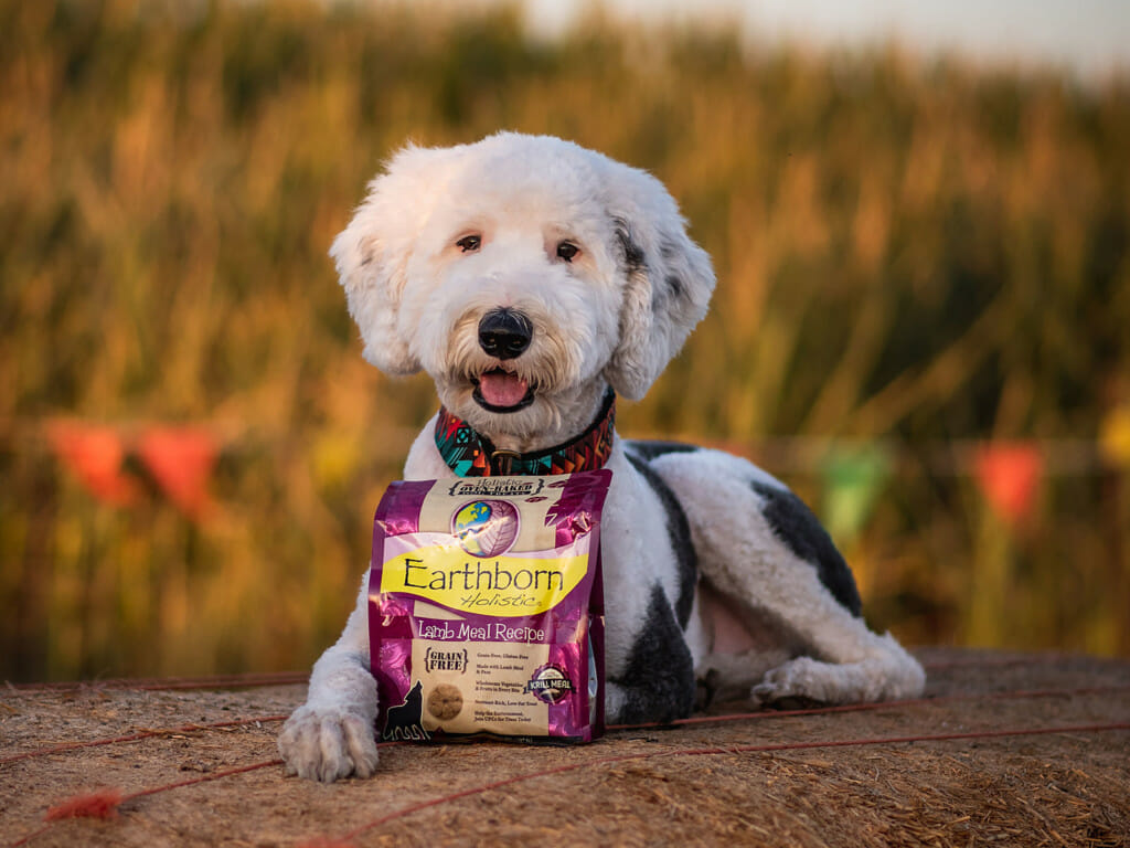 Dog laying on a bale of hay next to a bag of Earthborn Holistic Biscuits Lamb Meal Recipe