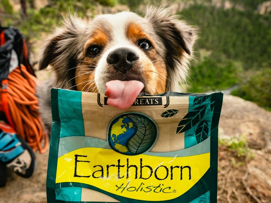 Dog sticking tongue out over a bag of Earthborn Holistic Biscuits Whitefish Meal Recipe