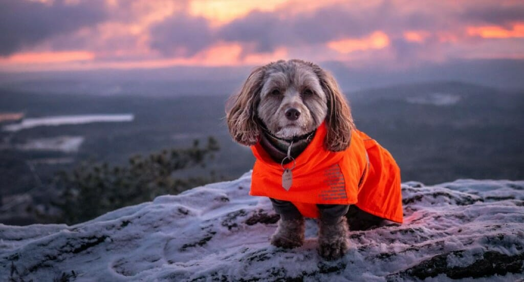 A small dog sits on a mountaintop wearing a parka
