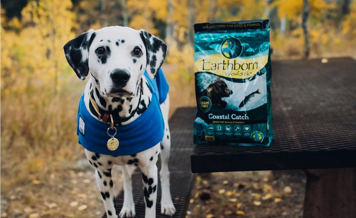 A Dalmatian stands next to a bag of Earthborn Holistic Coastal Catch