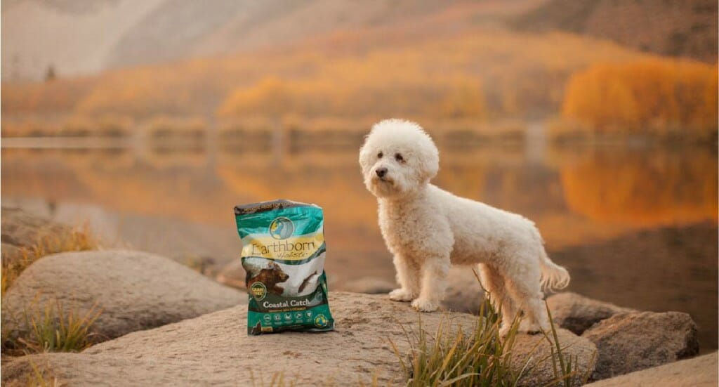 A poodle standing at an overlook point next to a bag of Earthborn Holistic Coastal Catch