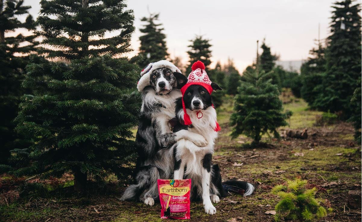 Two dogs hug at a Christmas tree farm with a bag of Earthborn Holistic treats