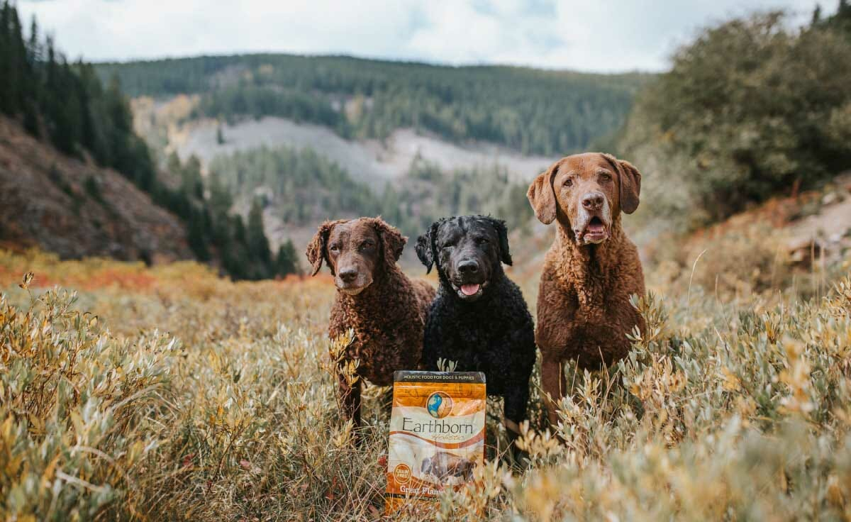 Three dogs stand in a field with a bag of Great Plains Feast dog food