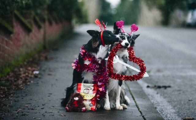 Ways to Show Your Pet Some Love this Valentine's Day
