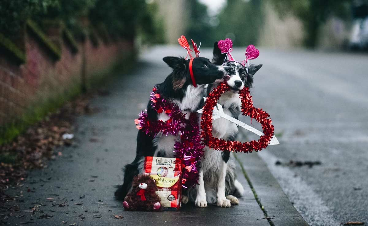 One dog leaning in to another for a kiss in Valentine's Day decor