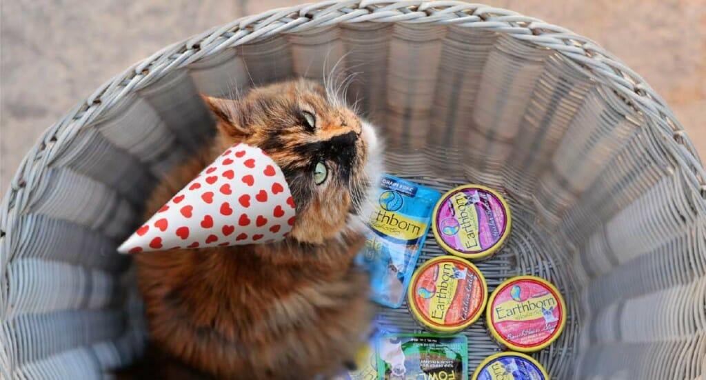 A cat in a Valentine's Day party hat sits in a basket of Earthborn Holistic cat food