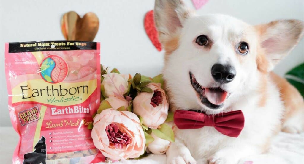 A smiling dog lays next to Earthborn Holistic dog treats surrounded by Valentine's Day decorations